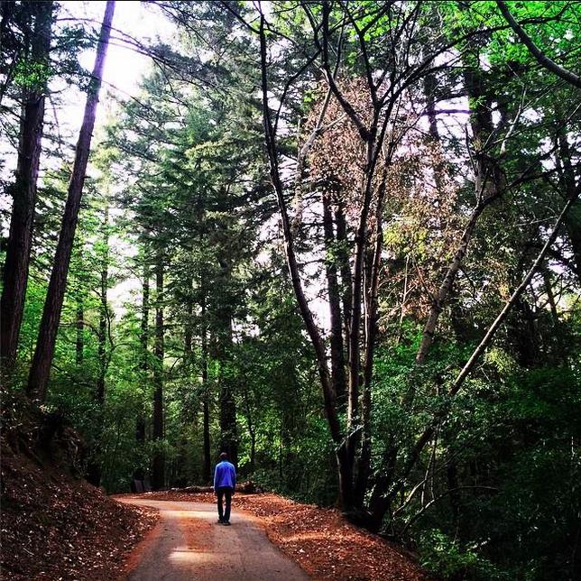 hiking_redwoods