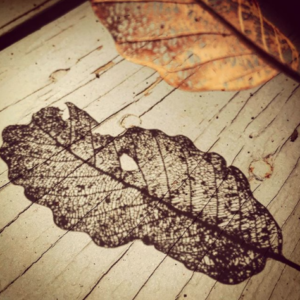 Rachael's picture of #spiritualwhitespace in an ordinary leaf.