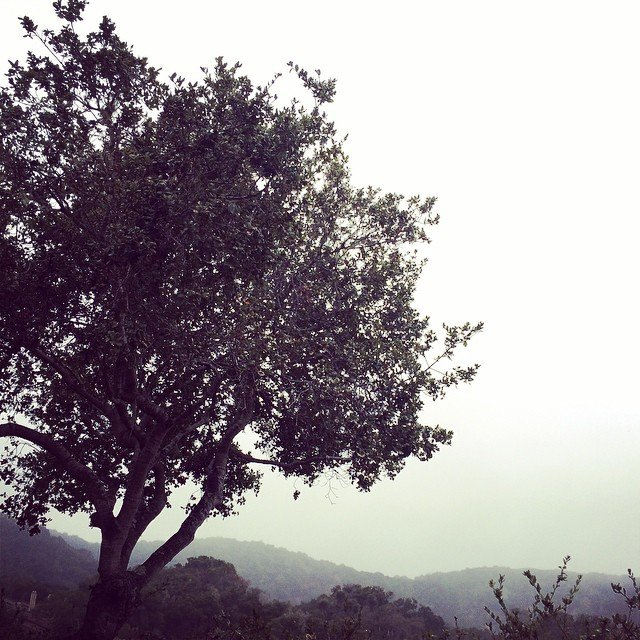 psalm_day1_carmelvalley_tree