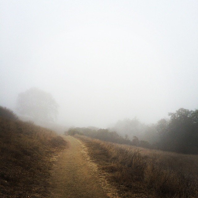 BonnieGray_fog_trail